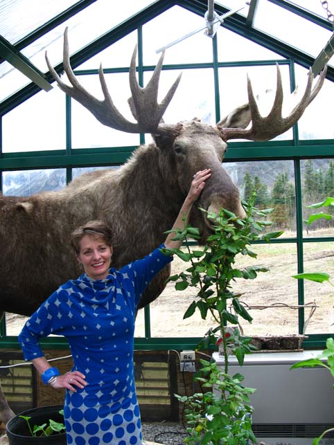 picture of Alice and Russell the stuffed moose at Sheep mountain Lodge