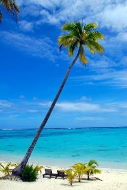 palm tree001