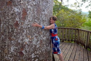 Kauri tree NZ