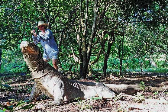 SLAYING-A-KOMODO-DRAGON